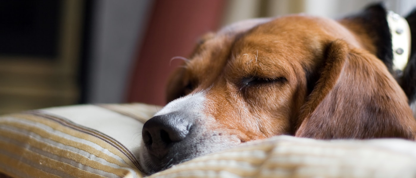 Suspected Kennel Cough Outbreak