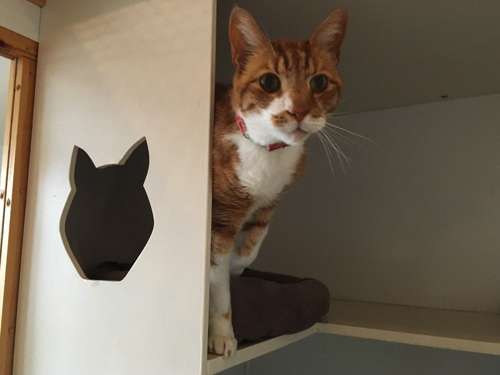 cattery_img